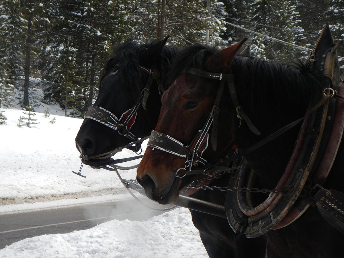 28 snow experience huttentocht dolomiti