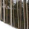 5_190_snow_experience_wildschonau_alpbachtal_2015 copy