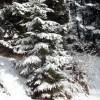 5_213_snow_experience_wildschonau_alpbachtal_2015 copy